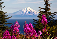 Mt. Augustine and fireweed